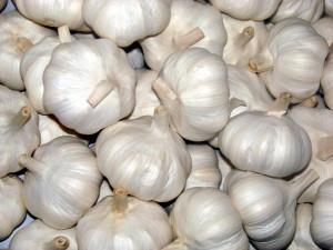 bawang putih/ garlic